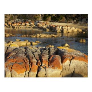 Orange Lichen on Rocks Binalong Bay Bay of Post Cards