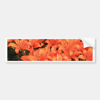 Orange liliums in bloom bumper sticker