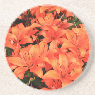 Orange liliums in bloom coaster