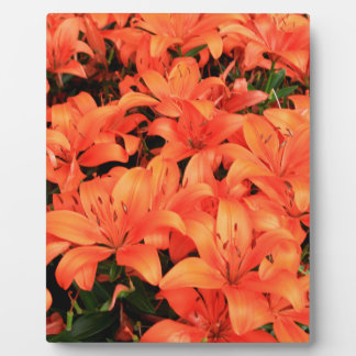Orange liliums in bloom display plaques
