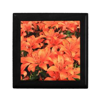Orange liliums in bloom gift box