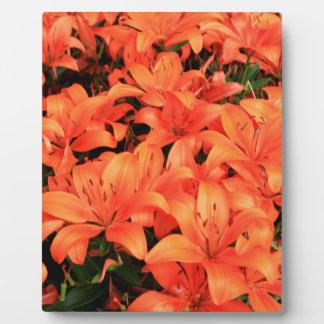 Orange liliums in bloom plaque