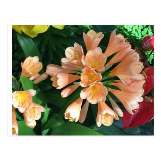 Orange Lilly Postcard