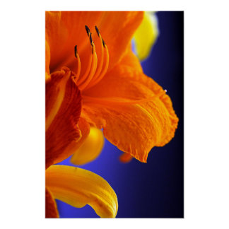 Orange Lily Bouquet Poster