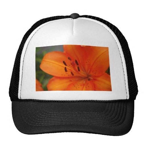 Orange Lily Trucker Hats