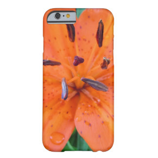 Orange Lily with water drops Barely There iPhone 6 Case