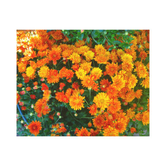 Orange Margarita Daisy Canvas Print