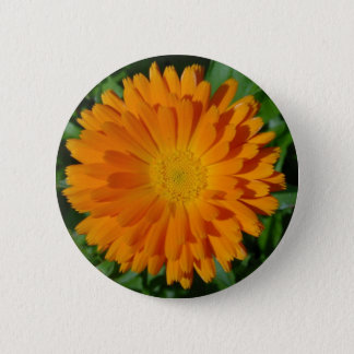 Orange Marigold Close Up With Garden Background 6 Cm Round Badge