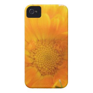 Orange Marigold Macro Blackberry Bold Case