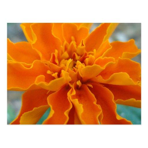 Orange marigold save the date post card