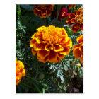 Orange Marigolds Vertical Postcard