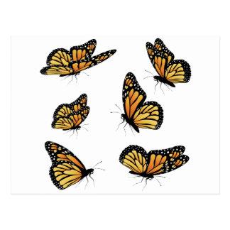 Orange Monarch Butterfly 2 Postcard