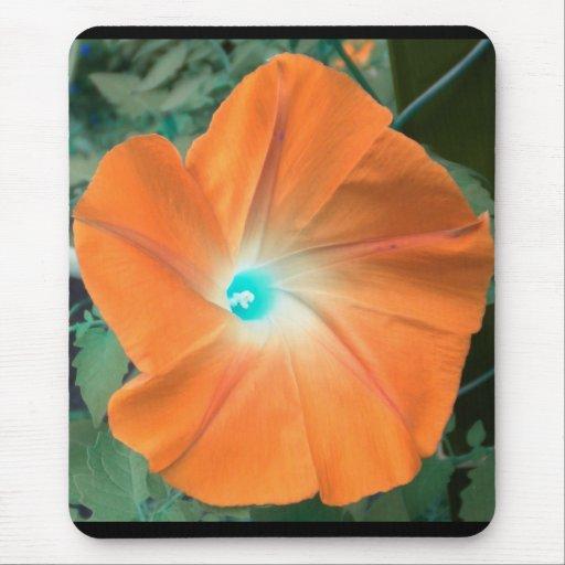 Orange Morning Glory Mouse Pads