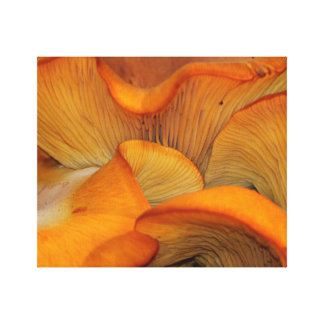 Orange Mushroom Abstract Canvas Print