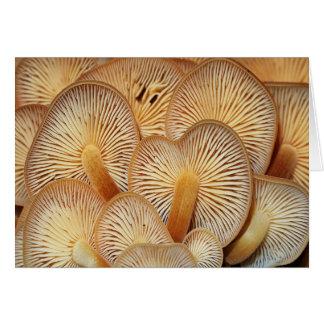 Orange Mycena Mushrooms Card