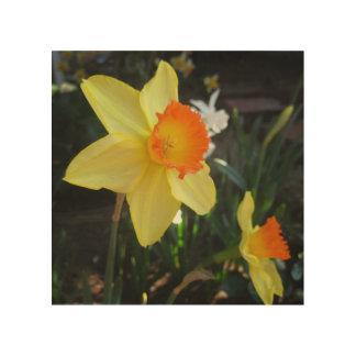 Orange Nosed Daffodil Wood Wall Art