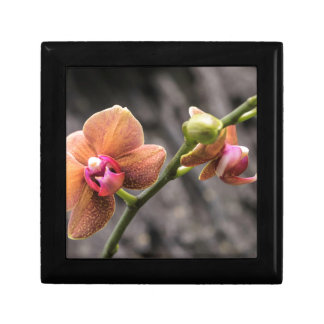 Orange Orchid Gift Box