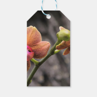 Orange Orchid Gift Tags