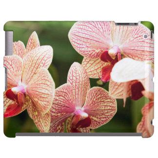 Orange Orchid Hybrid, South Africa