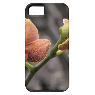 Orange Orchid iPhone 5 Cover