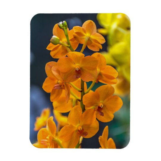 Orange orchids fridge magnet