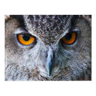 Orange Owl Eyes photography Postcard