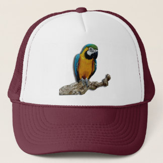 Orange Parrot alone hat