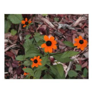 orange petaled flowers plant photograph flyer