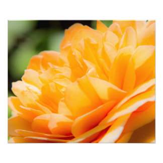 Orange Petals Photo Print