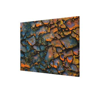Orange Petrified dinosaur bone Canvas Print