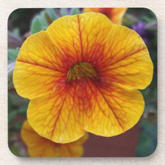 Orange Petunia Coaster