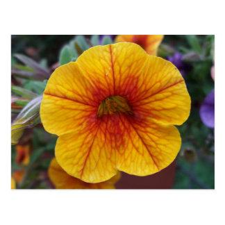 Orange Petunia Postcard