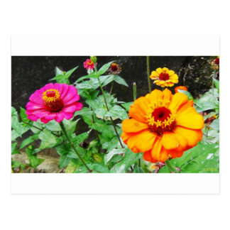 Orange & Pink Flowers Postcard