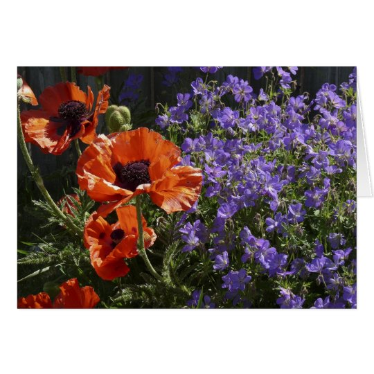 Orange Poppies Blank Greeting Card Poppies