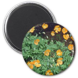 Orange Poppies flowers Refrigerator Magnet