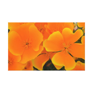 Orange Poppies in Spring Canvas Stretched Canvas Print