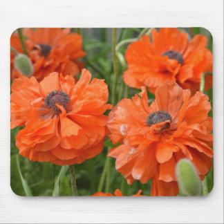 Orange Poppies Mouse Pad