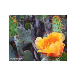 Orange prickly pear opuntia cactus flower photo canvas print