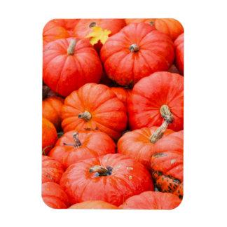 Orange pumpkins at market, Germany Magnet