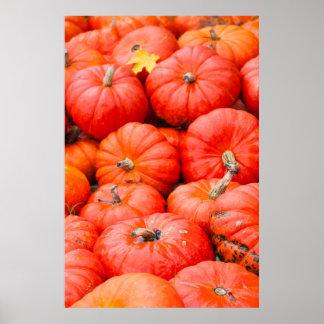 Orange pumpkins at market, Germany Poster