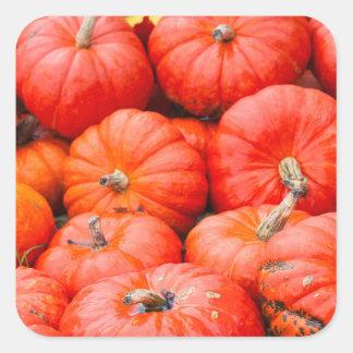 Orange pumpkins at market, Germany Square Sticker