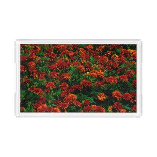 Orange Red Flower Landscape