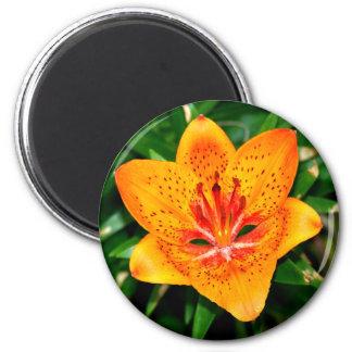 Orange Red Speckled Lily Fridge Magnet