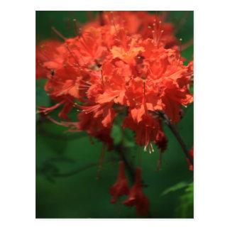 Orange Rhododendron Postcard