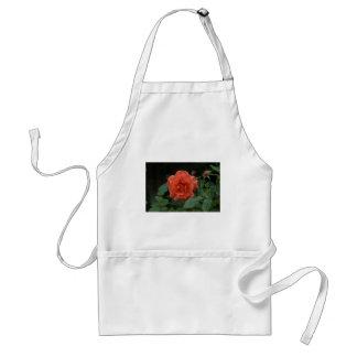 Orange Rose Standard Apron