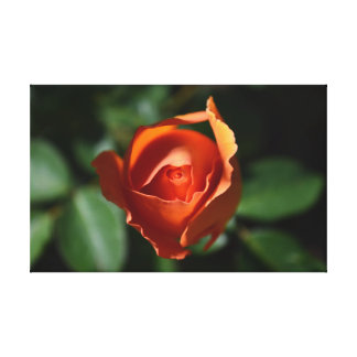 Orange Rose Blossom Gallery Wrapped Canvas