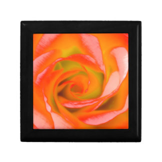 Orange Rose Close-up Small Square Gift Box