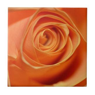 Orange rose in close up tile
