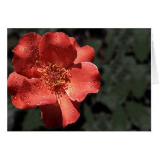 Orange Rose in Full Bloom Card