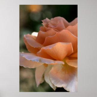 Orange Rose Print